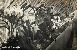 - Themes Divers -ref-M819- Fleurs - Carte Photo Exposition Orchidees - Orchidee - Horticulteur Vacherot Lecoufle - - Fleurs