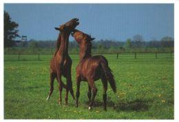 HORSES / PFERDE / CHEVAUX /    POSTCARD XL UNUSED     ( H  4494 ) - Pferde