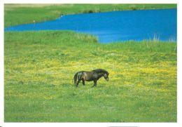 HORSES / PFERDE / CHEVAUX /    POSTCARD XL UNUSED     ( H  4496 ) - Pferde