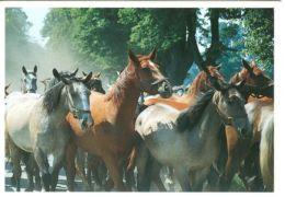HORSES / PFERDE / CHEVAUX /    POSTCARD XL UNUSED     ( H  4508 ) - Pferde