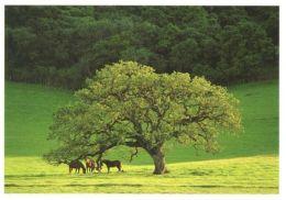 HORSES / PFERDE / CHEVAUX /    POSTCARD XL UNUSED     ( H  4509 ) - Pferde
