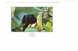 Guyane Singe Primate Tamarin Mains Rouges Saguinus Midas - Autres