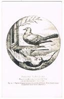 RB 1102 -  Unusual Postcard - Carrier Pigeons - Pigeons Voyageurs - Bird Animal Theme - Oiseaux