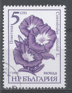 Bulgaria 1985, Scott #3107 Flower: Convolvulus Tricolor (U) - Bulgarie