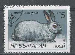 Bulgaria 1986, Scott #3146 Rabbit (U) - Bulgarie