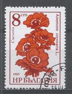 Bulgaria 1986, Scott #3185 Flower: Anemone Coronaria (U) - Bulgarie