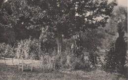 BOISSY L  AILLERIE  Un Coin Du Parc OISEAU BLEU - Boissy-l'Aillerie