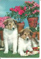Cani, Dogs, Chiens, Due Cuccioli Razza ? E Vasi Di Fiori - Perros