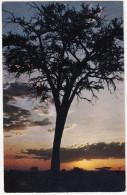 AFRICAN LANDSCAPE - SUNRISE  -  Kenya - Kenia