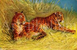 CPA / Postcard / Artist Signed / August Müller / München / Tigres / Tigers / Ed. S W S B No 6962 - Mueller, August - Munich