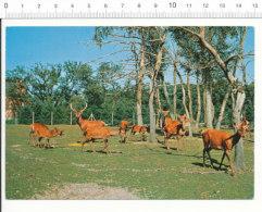 Parc Zoologique De Montevran Zoo Cerfs De France / CP 68/27 - Animals