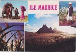 ILE MAURICE,MAURITIUS,archipel Des Mascareignes,océan Indien,ile Volcanique,champs De Canne à Sucre - Ansichtskarten
