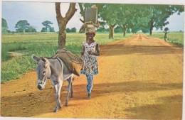 AFRIQUE,Haute Volta,colonie,burkina Faso,femme Heureuse,paysane,ane - Burkina Faso