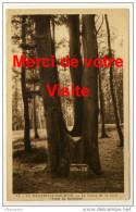 La Mailleraye Sur Seine  - Le Chêne De La Cuve  - Forêt De Brotonne - Ohne Zuordnung