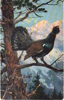 Chasse, Hunting  Auerhahn  Korhoen Hunter  Oiseau  Geflügel  Illustrateur  Old  Cpa. Ca. 1900 - Caccia