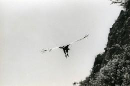 Espagne Zahara Vautour Fauve Griffon Photographie Animalière Amateur Des Années 1970 - Photographs