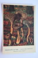 """Cantharellus Tubaeformis  MUSHROOMS -  Mushroom - Champignon - Printed In Ukraine (""""Moya Lystivka"""" Edition), 2014 - Champignons"""