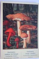 "Cortinarius Bolaris & C. Cinnab  MUSHROOMS -  Mushroom - Champignon - Printed In Ukraine (""Moya Lystivka"" Edition), 2014 - Champignons"