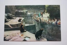RUSSIA. Kaliningrad. Zoo   - OLD USSR Postcard  1975 - ANIMATED - Bear- - Orsi