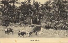 245 - 1915 Libia Derna Oasi TRAVELLED - Libia