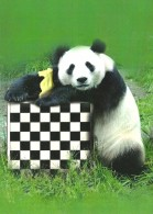 CHESS * SPORT * GIANT PANDA * BEAR * ANIMAL *  Caissa CCC 0140 * Hungary - Echecs