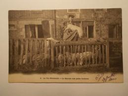 Carte Postale - La Vie Normande - Le Marché Aux Petits Cochons (103A) - Basse-Normandie