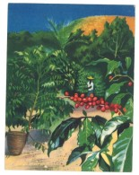 Chromo Offert Par Astra - Des Tropiques à Notre Table : Grains De Café - Autres