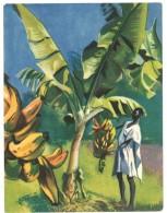 Chromo Offert Par Astra - Des Tropiques à Notre Table : La Banane - Autres