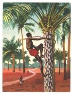 Chromo Offert Par Astra - Des Tropiques à Notre Table : Le Palmier à L'huile ( Huile De Palme ...) - Autres