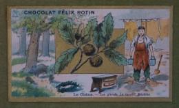 Félix POTIN - Chromo Sujet Botanique - Nature - Le Chêne - Les Glands, Le Tannin, Meubles - Imp. Champenois - Cioccolato