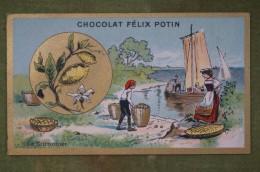 Félix POTIN - Chromo Sujet Botanique - Nature - Le Citronnier - Imp. Champenois - Cioccolato