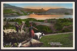 Harvesting L'Auvergne Le Lac Chambon. Unused Postcard. - Farms