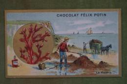 Félix POTIN - Chromo Sujet Botanique - Nature - Le Varech - Imp Champenois - Cioccolato