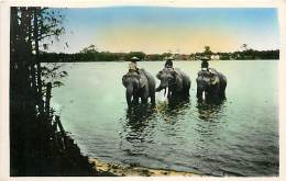 C-16 457 :  CENTRE  VIET-NAM  HUE  BAIGNADE DES ELEPHANTS - Elefanten