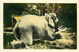 C-16 459 :  CENTRE  VIET-NAM  NGHÊ-AN-DOHAM ELEPHANT  TRAINAGE DES BOIS - Elephants