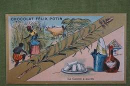 Félix POTIN - Chromo Sujet Botanique - Nature - La Canne à Sucre - Imp Champenois - Cioccolato
