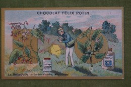 Félix POTIN - Chromo Sujet Botanique - Nature - La Belladone - La Douce Amère, Médicament - Imp Champenois - Cioccolato