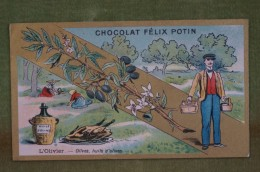 Félix POTIN - Chromo Sujet Botanique - Nature - L'Olivier - Olives, Huile D'olives - Imp Champenois - Cioccolato