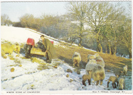 Chawleigh: TRACTOR, FARMER, SHEEP, LAMBS - Winter Scene - (Devon, England) - Tractors
