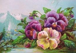 CHROMO XIX ° Gaufrée BOUQUET De PENSEES & MONTAGNES 1885 , Embossed  Old Scrap Flowers PANSIES Recto Verso  Prix Fixe - Fleurs