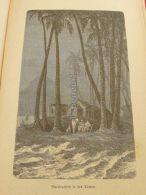 Tropen Des Tropiques Tropical Tropics Engraving Print 1895 - Prints & Engravings