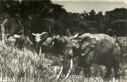 Fauna Angolana - Angola