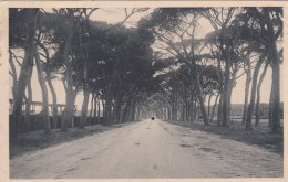 San Rossore - Italia