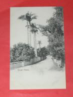 BERMUDA / BERMUDES    1902   ROYAL PALMS   CIRC NON EDITION - Bermudes