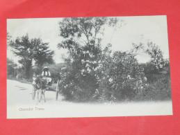BERMUDA / BERMUDES    1902   OLEANDER TREES  CIRC NON EDITION - Bermudes