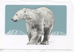 Ours Blanc - édition WWF - Dessin Gravure (CP Double) - Bären