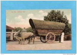 CEYLON-Colombo-bullock Cart -gros Plan- Attelage De Buffles-a Voyagé Pour Françe En 1906-Bel Affranchissement - Sri Lanka (Ceilán)