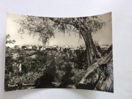 FAUGLIA - Panorama - Cartolina FG BN V 1955 - Italia