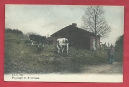 Paysage En Ardenne - Masure Et Vaches ... En Balades - Jolie Carte Couleur - 1909 ( Verso Zien ) - België