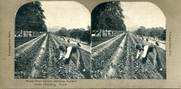 N°50253 -carte Stéréoscopique- Jardin D´Edinburg- Ecosse- - Estereoscópicas